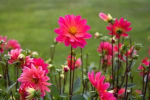 grosvenor-to-host-belgravia-in-bloom-festival